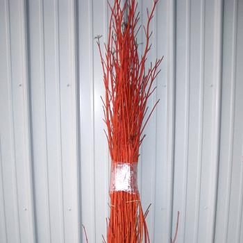 Dogwood Redstick
